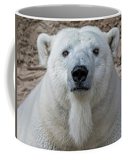 Coffee Mug featuring the photograph Polar Bear by Rand