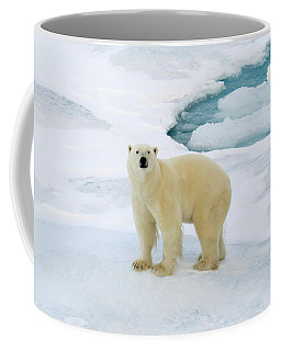 Polar Gaze Coffee Mug