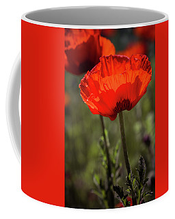 Poppies In The Morning Sun Coffee Mug