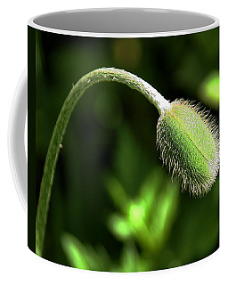 Poppy Bud In Sunlight Coffee Mug