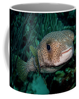 Porcupine Fish Coffee Mug