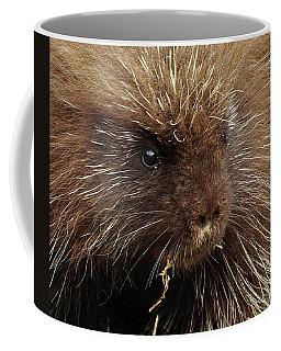 Porcupine Coffee Mug by Glenn Gordon