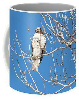 portract of Hawk Coffee Mug