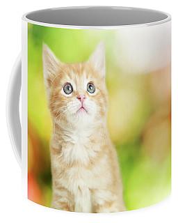 Portrait Cute Kitten Blurred Scenic Background Coffee Mug