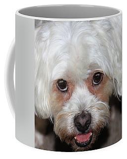 Portrait Of A Lahsa Coffee Mug