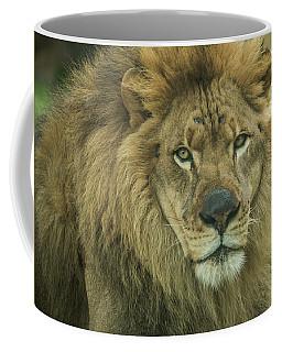 Portrait Of A Lion Coffee Mug