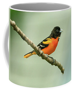 Portrait Of A Singing Baltimore Oriole Coffee Mug