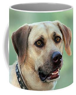 Portrait Of A Yellow Labrador Retriever Coffee Mug