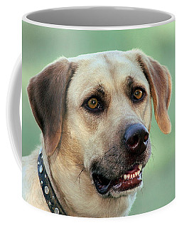 Portrait Of A Yellow Labrador Retriever Coffee Mug