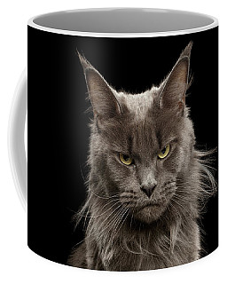 Portrait Of Angry Maine Coon On Black Coffee Mug