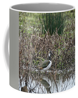 Portrait Of Beautiful Lapwing Bird Seen Through Reeds On Side Of Coffee Mug