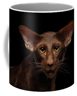 Coffee Mug featuring the photograph Portrait Of Brown Oriental Cat On Isolated Black Background by Sergey Taran