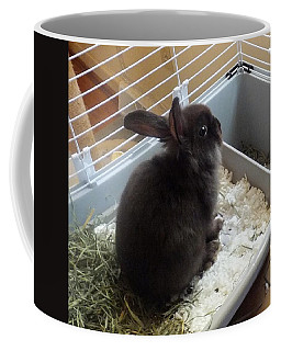 Coffee Mug featuring the photograph Portrait Of Bunbunz by Denise Fulmer