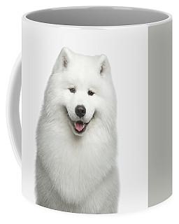 Portrait Of Samoyed Dog On White Background Coffee Mug by Sergey Taran