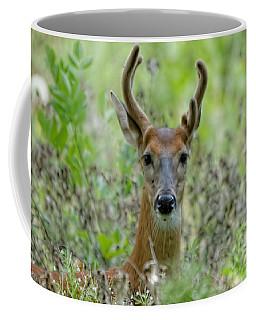 Portriat Of Male Deer Coffee Mug