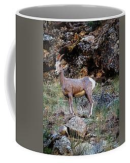Posing Mountain Sheep Coffee Mug