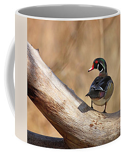 Posing Wood Duck Coffee Mug