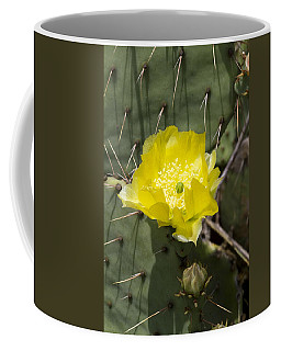 Prickly Pear Cactus Blossom - Opuntia Littoralis Coffee Mug