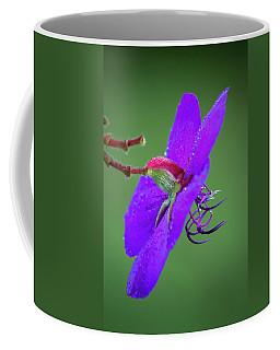 Coffee Mug featuring the photograph Princess Flower, Nuwara Eliya, 2012 by Hitendra SINKAR