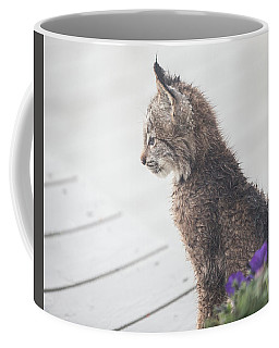 Profile In Kitten Coffee Mug