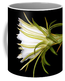 Profile Night Blooming Cereus Coffee Mug by Barbara Chichester