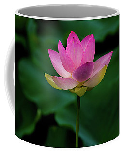 Profile Of A Lotus Lily Coffee Mug