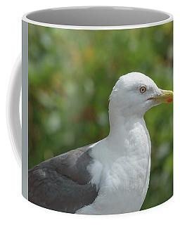 Coffee Mug featuring the photograph Profile Of Adult Seagull by Jacek Wojnarowski