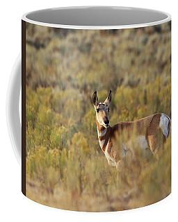 Pronghorn Doe Coffee Mug