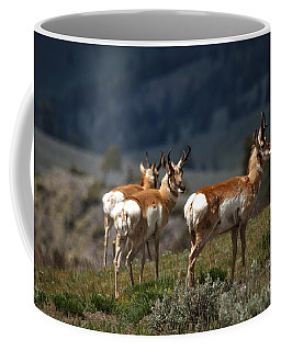 Pronghorns Coffee Mug