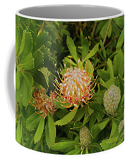 Proteas Coffee Mug by Cassandra Buckley