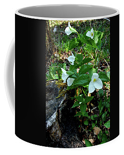 Coffee Mug featuring the photograph Protected Wild Trillium  by LeeAnn McLaneGoetz McLaneGoetzStudioLLCcom