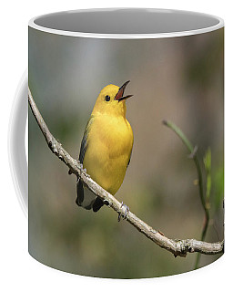 Prothonotary Warbler Singing Coffee Mug