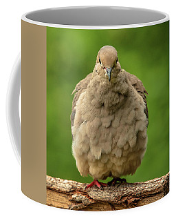 Puffed Dove Coffee Mug by Jim Moore