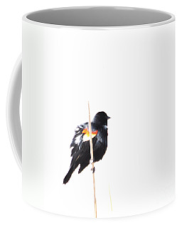Puffed Up Red-winged Blackbird Coffee Mug