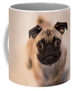 Coffee Mug featuring the photograph Pug Dog by Laura Fasulo