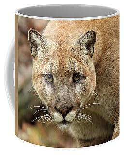 Puma Male Approaching Coffee Mug by Max Allen