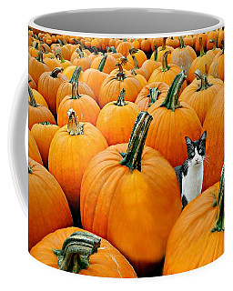 Pumpkin Patch Cat Coffee Mug