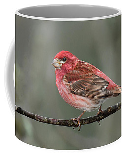 Purble Finch Coffee Mug