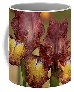 Purple And Yellow Bearded Iris Coffee Mug by Sheila Brown