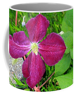Purple Clematis In Bloom Coffee Mug