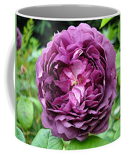 Purple English Rose Coffee Mug