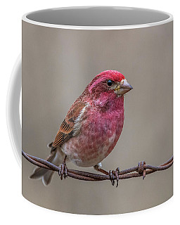 Coffee Mug featuring the photograph Purple Finch On Barbwire by Paul Freidlund