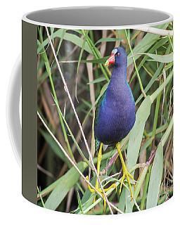 Coffee Mug featuring the photograph Purple Gallinule by Robert Frederick