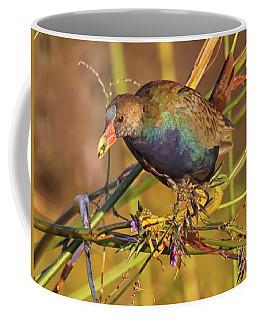Coffee Mug featuring the photograph Purple Gallinule With A Treat by Myrna Bradshaw