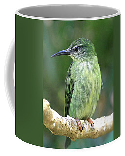 Purple Honeycreeper Female Coffee Mug