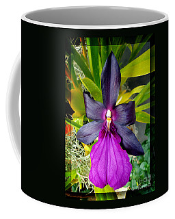 Coffee Mug featuring the photograph Purple Orchid Majesty by Sue Melvin