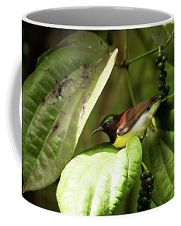 Purple-rumped Sunbird Coffee Mug