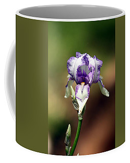 Purple Striped Bearded Iris Coffee Mug by Sheila Brown