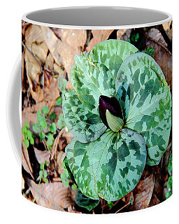 Purple Toadshade Trillium Coffee Mug