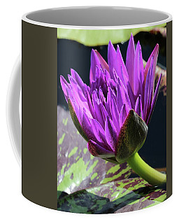 Purple Water Lily Coffee Mug